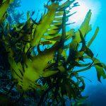 https://okagesamanet.com/seaweed/728-2/